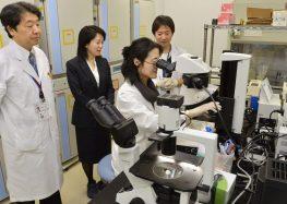 معالجة العمى بالخلايا الجذعية