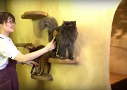 مقاهي طوكيوتجذب الزائرين بحيواناتها الأليفة