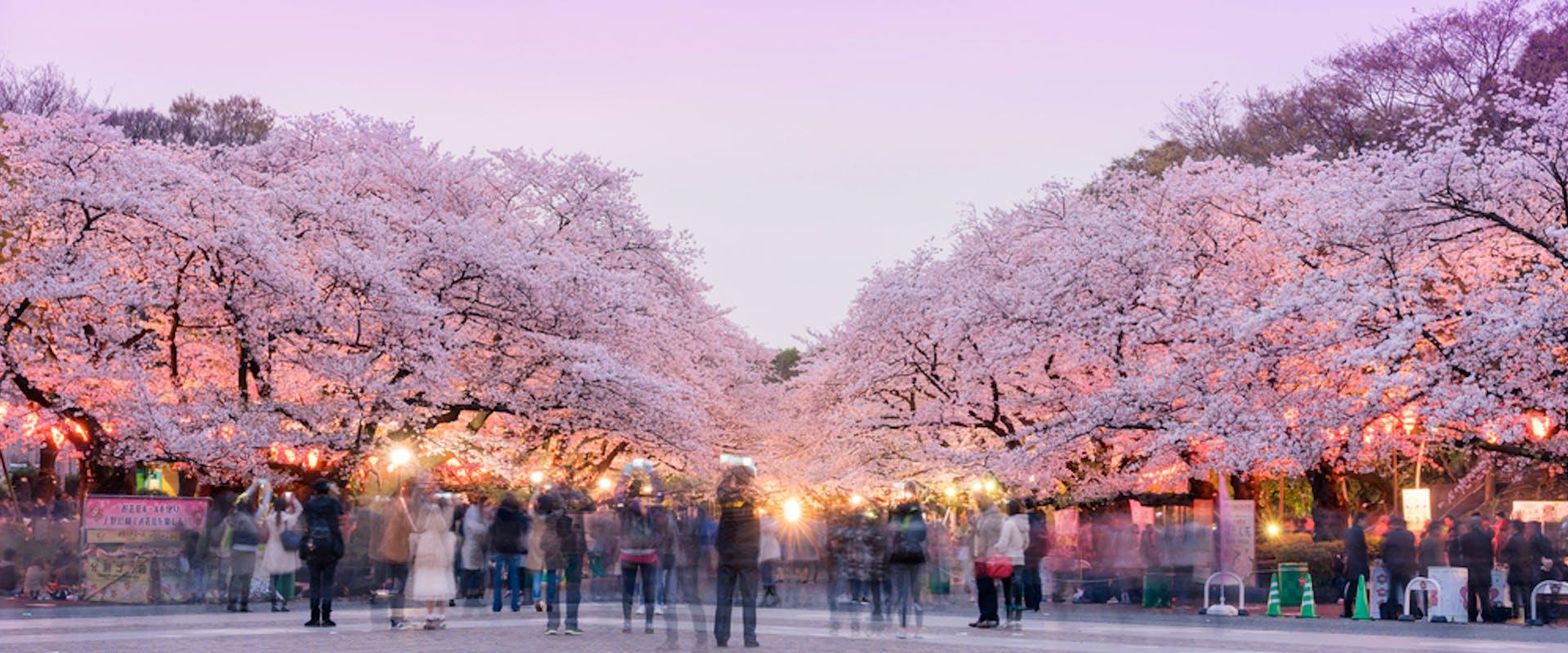 حديقة أوينو في طوكيو