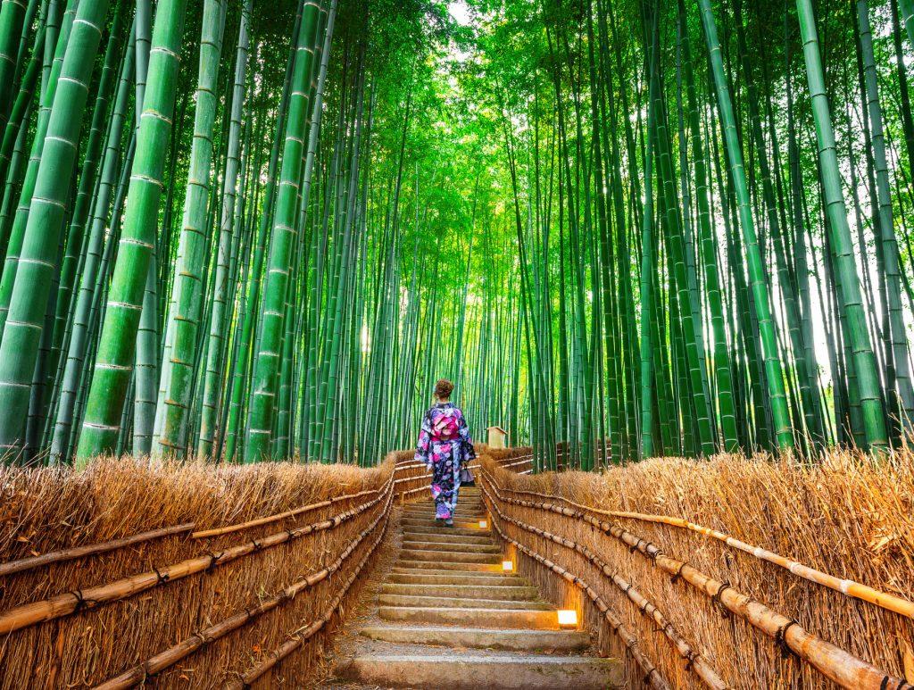 غابة الخيزران في كيوتو