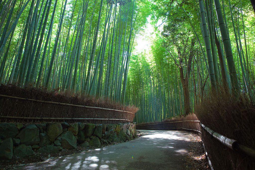 غابة ساغانو للخيزران: