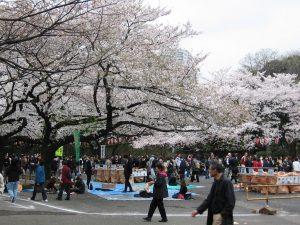 منتزه أوينو أثناء الربيع