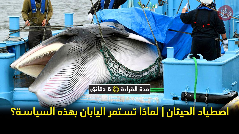 اصطياد الحيتان | لماذا تستمر اليابان بهذه السياسة؟