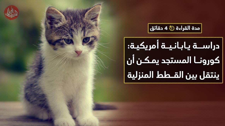 دراسة يابانية أمريكية: كورونا المستجد يمكن أن ينتقل بين القطط المنزلية